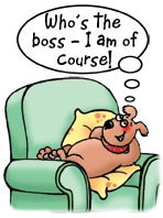 Scraggs the dog laid in an armchair. Who's the boss? I am of course! Dog cartoon, dogs cartoons, funny dog images