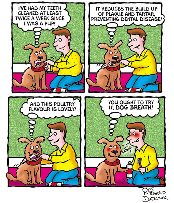 dog cartoon strip, Scraggs cartoon strip of him having his teeth brushed by his owner. In the last frame he suggest that his owner ought to do something about his garlic breathe